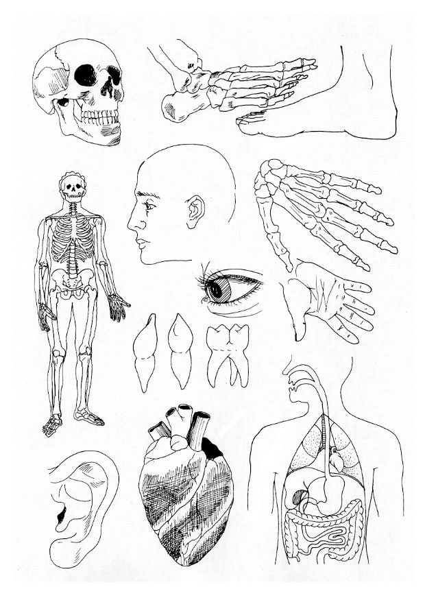 All kinds of parts coloring page