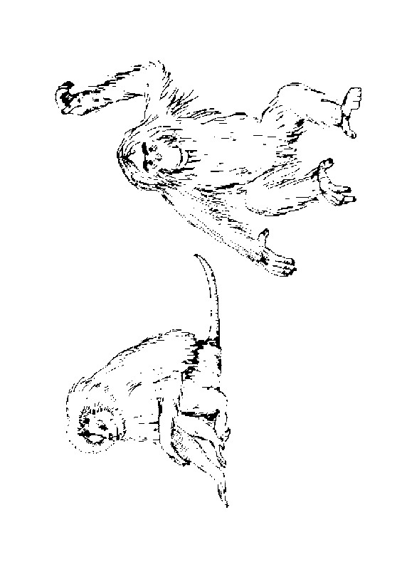 Monkey (20) coloring page