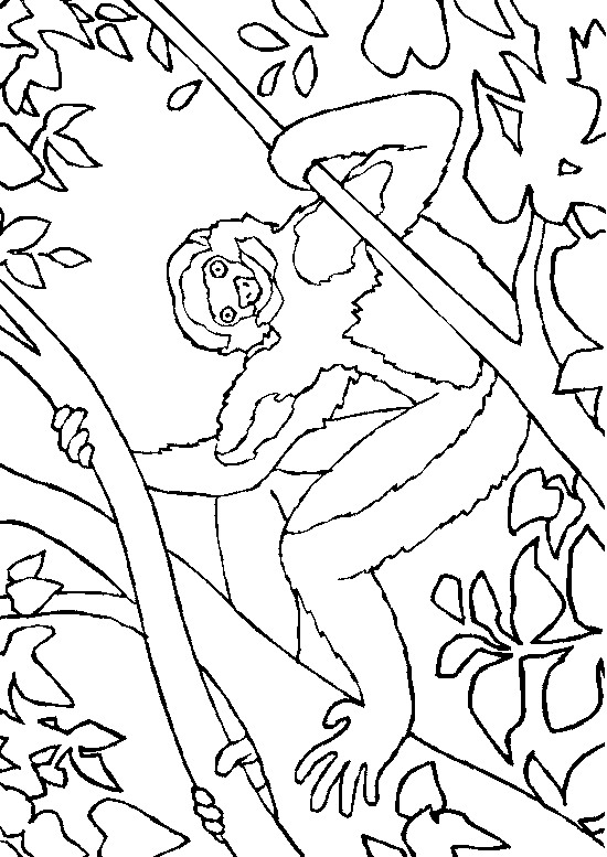 Monkey (23) coloring page