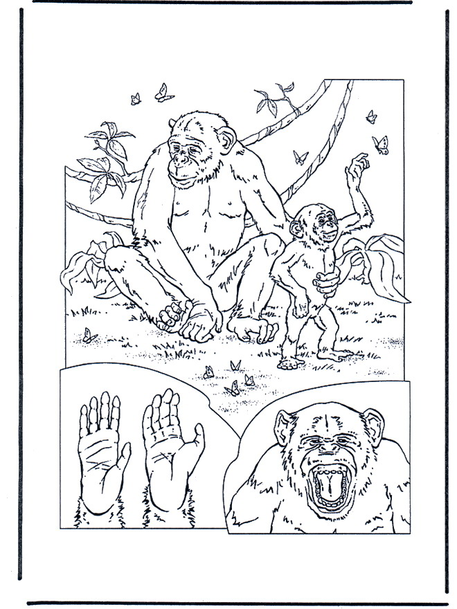 Monkey (3) coloring page