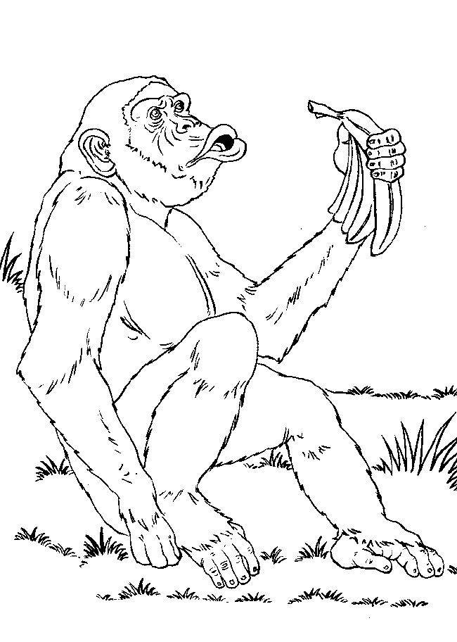 Monkey (4) coloring page