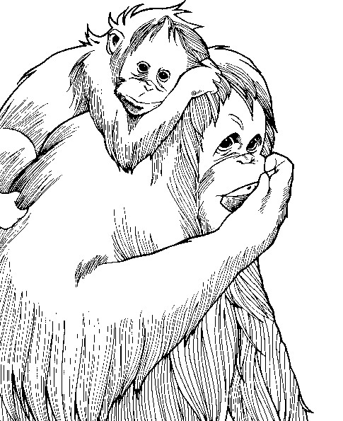 Monkey (5) coloring page