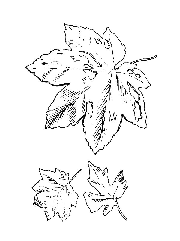 Leaves (20) coloring page