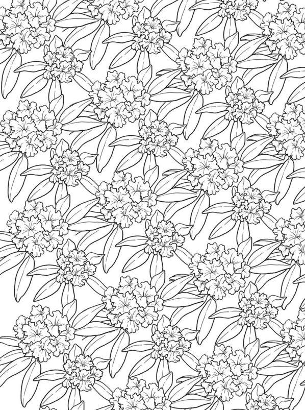 Bloemen voor volwassenen (13) kleurplaat
