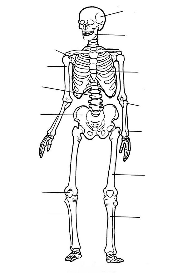 The skeleton (2) coloring page
