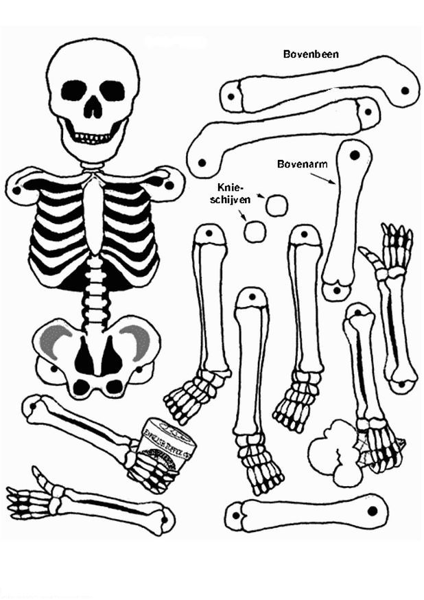 The skeleton coloring page