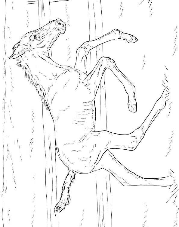Horses (6) coloring page