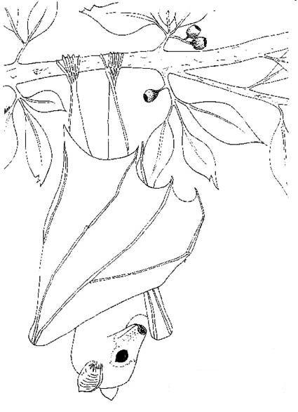 Bats (1) coloring page