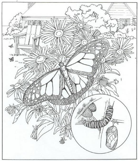 Kleurplaten Vlinders Voor Volwassenen.Vlinders Kleurplaat Jouwkleurplaten