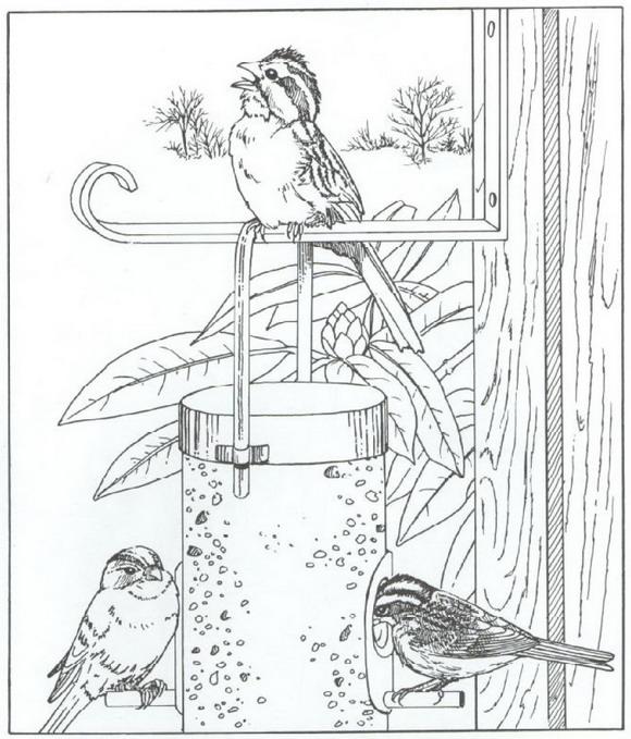 vogels (1) kleurplaat