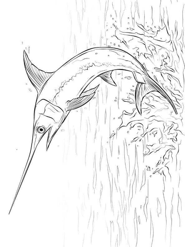 Zwaardvis (6) kleurplaat