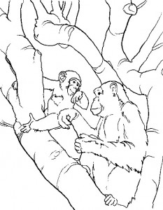 coloring page Monkeys (13)
