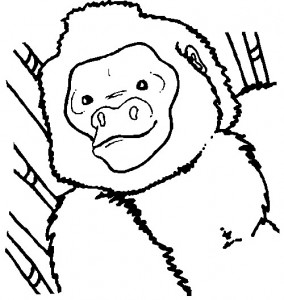 coloring page Monkeys (14)
