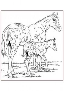 målarbok Appaloosa hästar
