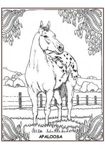 målarbok Appaloosa