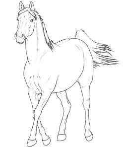 coloring page arab mare