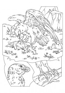 målarbok örn