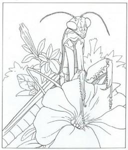 bönsyrsa målarbok