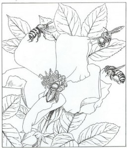 kleurplaat bijen