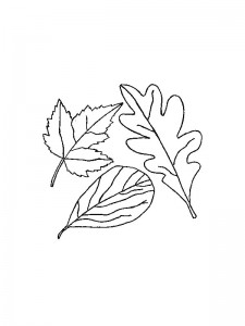 coloring page Leaves (1)