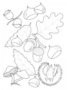 coloring page Leaves (12)