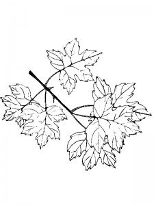 coloring page Leaves (16)