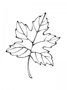 coloring page Leaves (17)