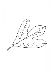 coloring page Leaves (2)