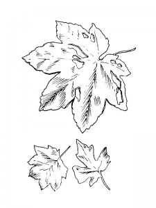 coloring page Leaves (20)