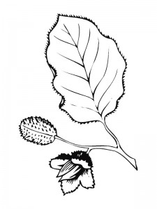 coloring page Leaves (21)