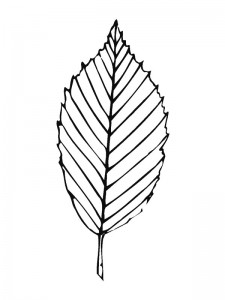 coloring page Leaves (23)