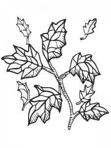 coloring page Leaves (27)