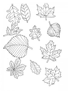 coloring page Leaves (28)