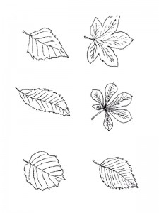 coloring page Leaves (29)