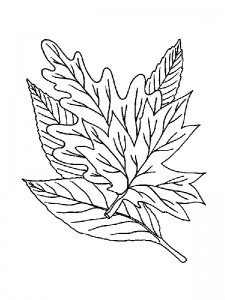 coloring page Leaves (30)