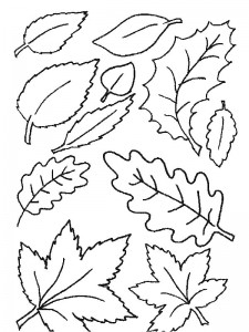 coloring page Leaves (31)