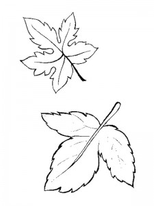 coloring page Leaves (33)