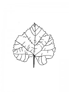 coloring page Leaves (34)