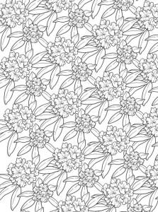 målarbok Blommor för vuxna (13)