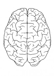 coloring page The brain