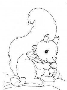 coloring page Squirrel (2)