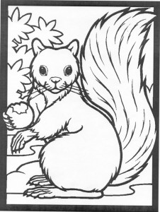 coloring page Squirrel (7)