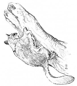 kleurplaat Eekhoorn (9)