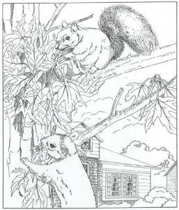 kleurplaat eekhoorns (1)