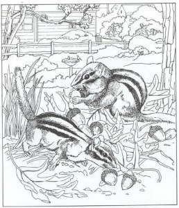squirrels coloring page