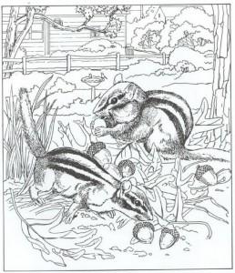 kleurplaat eekhoorns