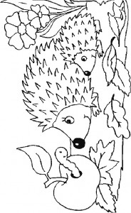 coloring page Hedgehogs (28)