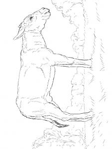 Disegno da colorare asini (2)