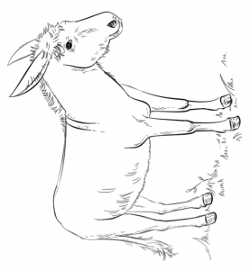 coloring page Donkeys (3)