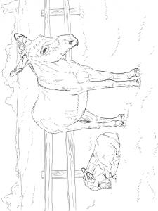 målarbok Åsnor (4)